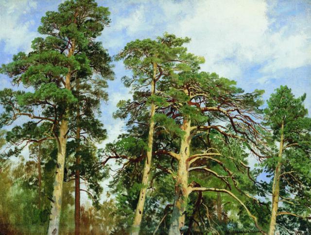 Картины Шишкина.Верхушки сосен