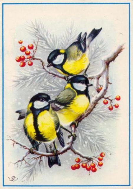 птицы, птицы