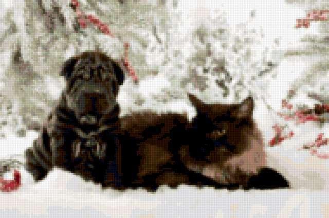 Шарпей и кошка, предпросмотр