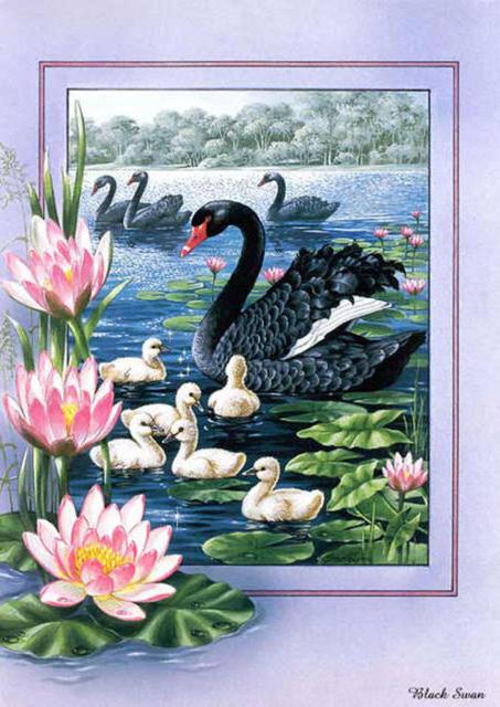 Черные лебеди., оригинал