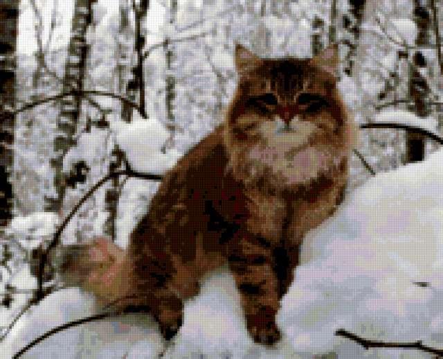 Зимний кот, предпросмотр
