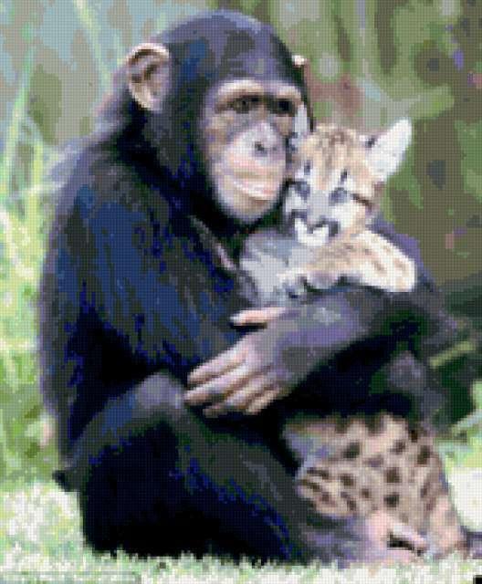 животные, прикол, шимпанзе