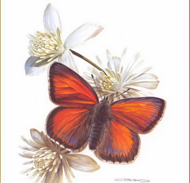 Бабочка на цветке, оригинал