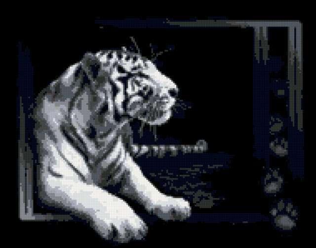 Тигр на черном фоне,