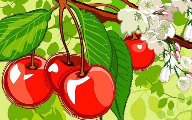 Вишенки на ветке, фрукты кухня