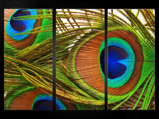 Триптих перо павлина, оригинал