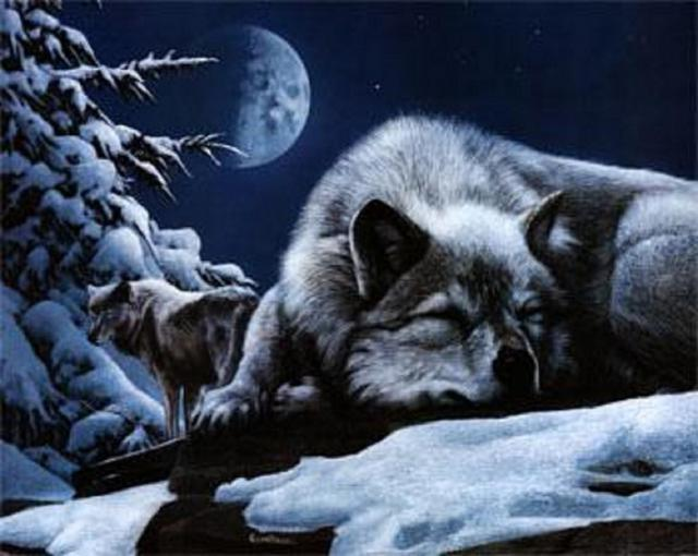 Волк, животные, зима, снег