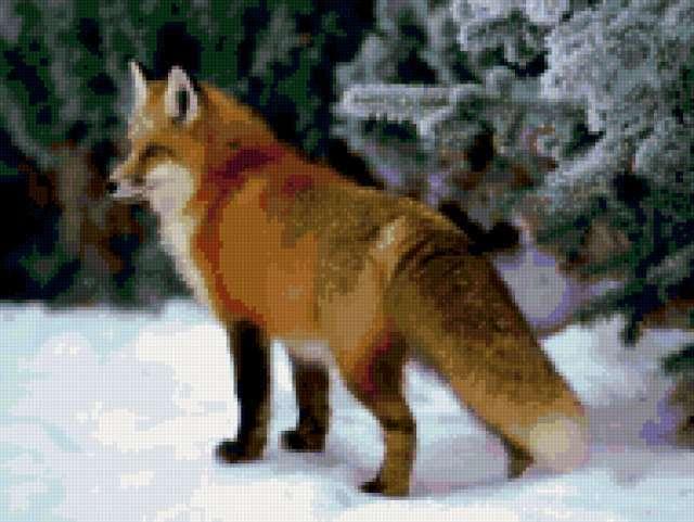 Лиса в зимнем лесу, звери,