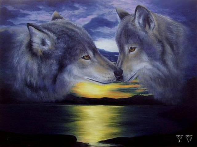 Волчья любовь, волк, любовь,