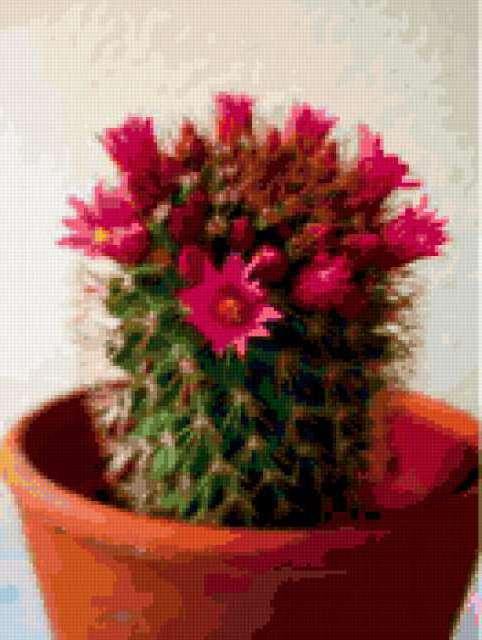 Цветочный кактус)