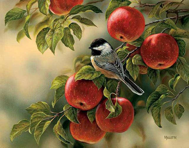 Синица на яблоне, оригинал