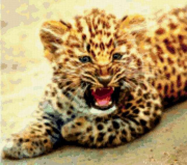 Рычащий тигрёнок!