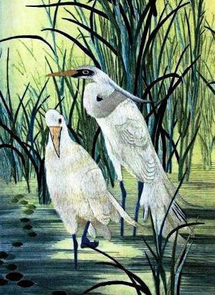 Белые цапли в камышах, птицы,