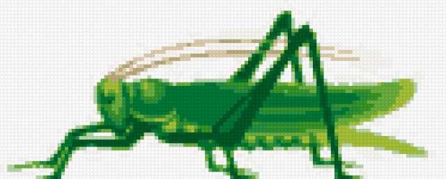 Схема вышивки кузнечика 74
