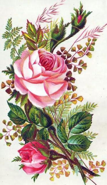 Розочка, розочка, розы, роза,