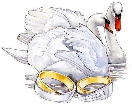 Лебеди и кольца, оригинал