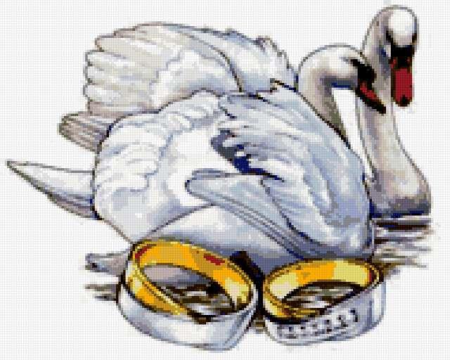 Лебеди и кольца, предпросмотр