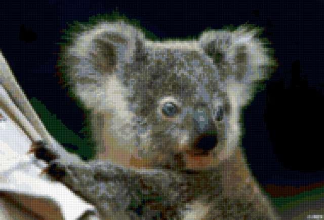 Очень смешная коала))