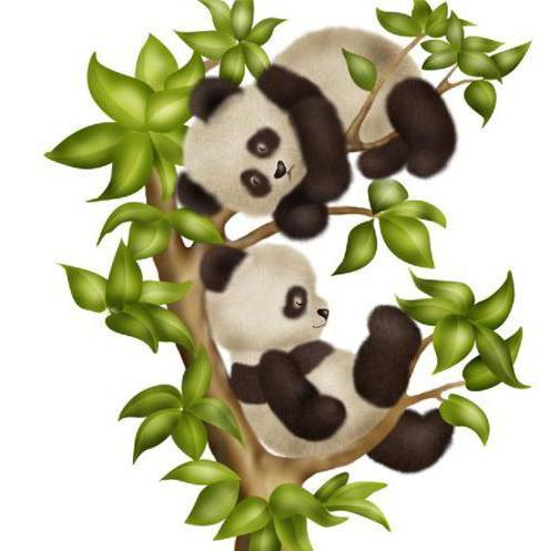 Панды на ветке, оригинал