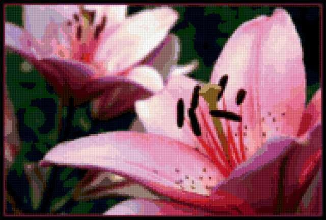 Розовые лилии)), предпросмотр