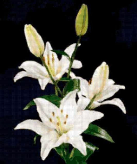 Доставка цветов Ижевск цветы Ижевск цветы с доставкой в