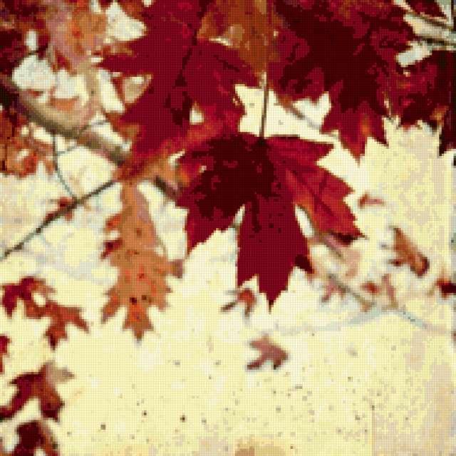 Кленовые листья, осень клен