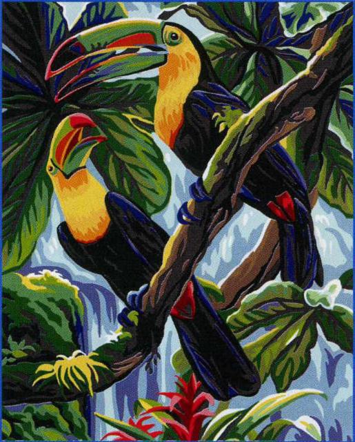 Карибские туканы, Птички