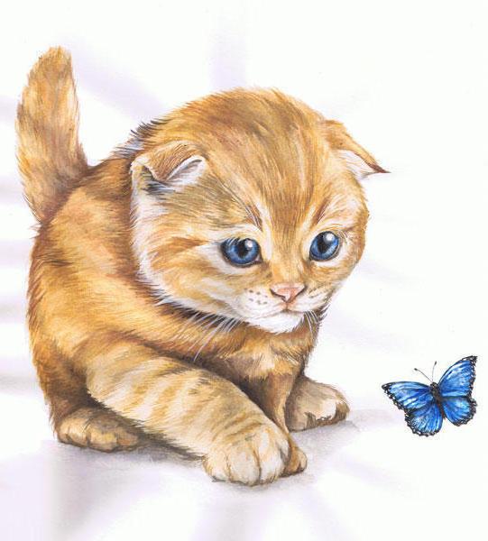 Голубые глаза и бабочка,