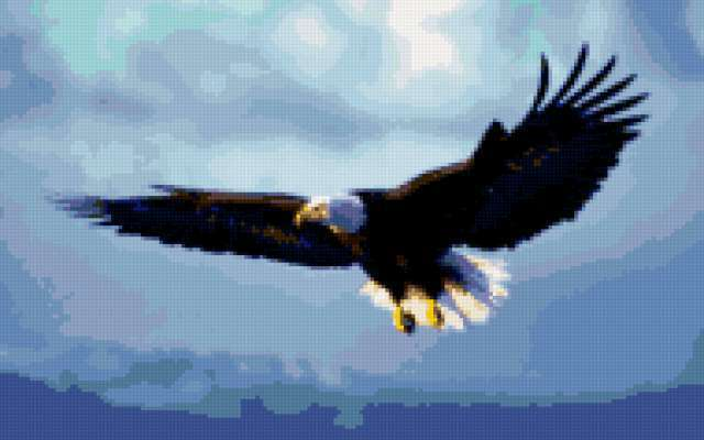 Орёл, предпросмотр