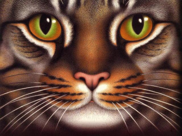 Трехцветный кот, оригинал