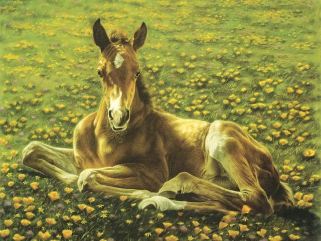 Лошади. Жеребенок, оригинал