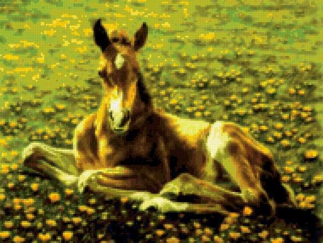 Лошади. Жеребенок