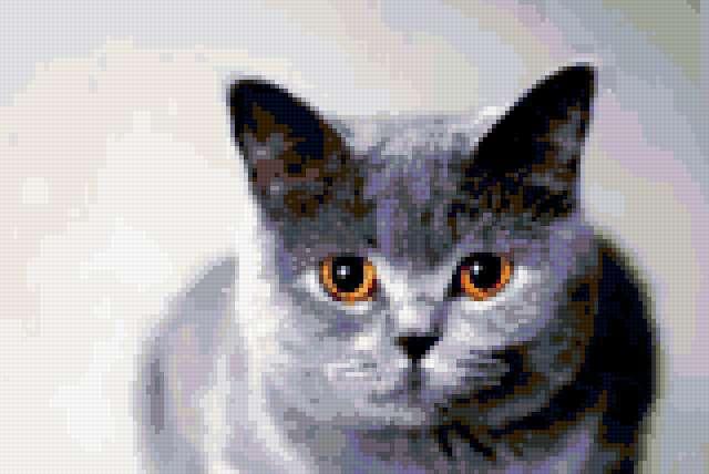 Британская кошка, предпросмотр