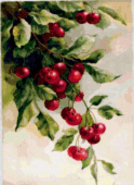 Ветка вишни, предпросмотр