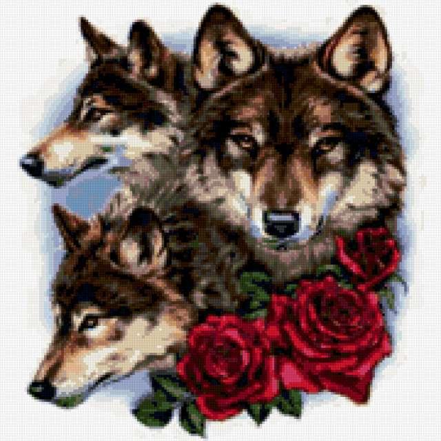 Волки и розы, волк, роза,
