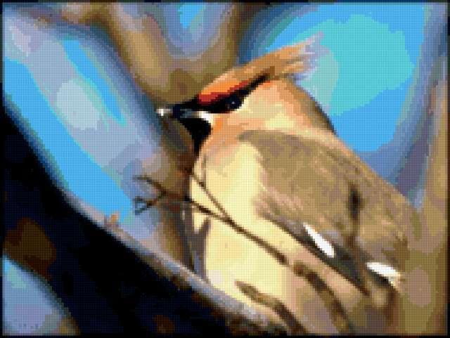 Свиристель, свиристель, птицы