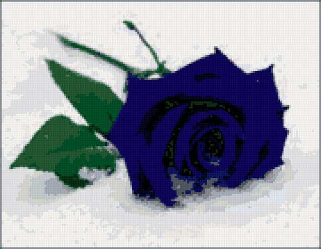 Синяя роза на снегу,