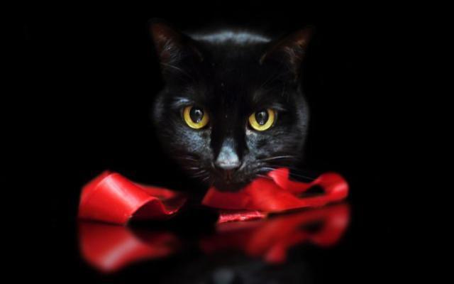 Черный кот с красным бантом,