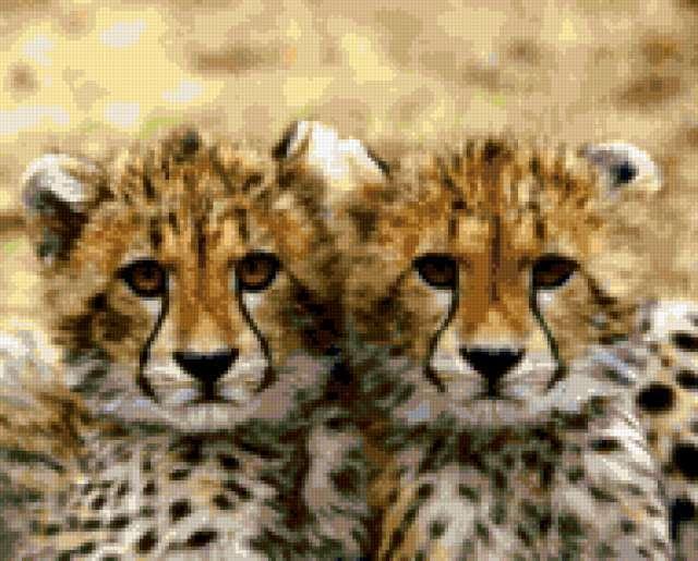 Малыши-близнецы, предпросмотр