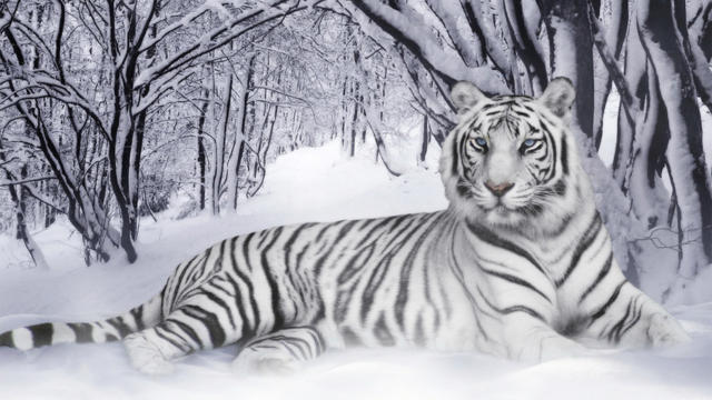 Белый тигр, оригинал