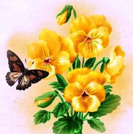 лепесток, виола, бабочка,