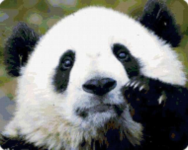Панда, предпросмотр
