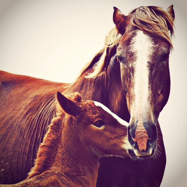Лошадь и жеребенок , оригинал