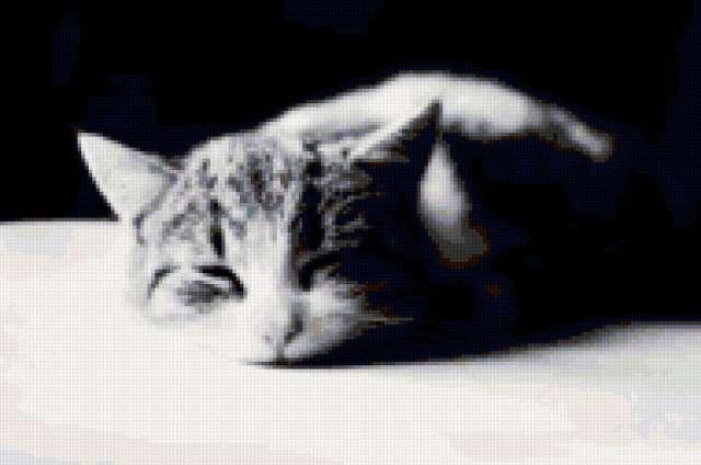 Кот спит, черно-белые,