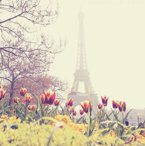 Тюльпаны и Эйфелева башня,