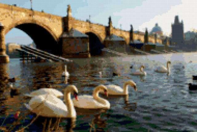 Прага, лебеди, предпросмотр
