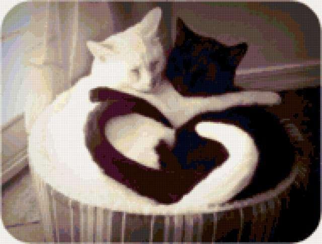 Белая и черная кошка,