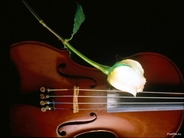 Скрипка и роза,