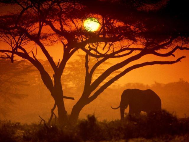 Слон на закате)), оригинал