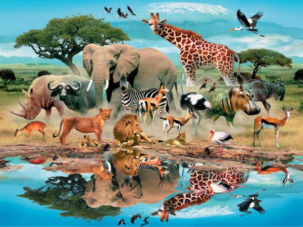 Животные африки, оригинал